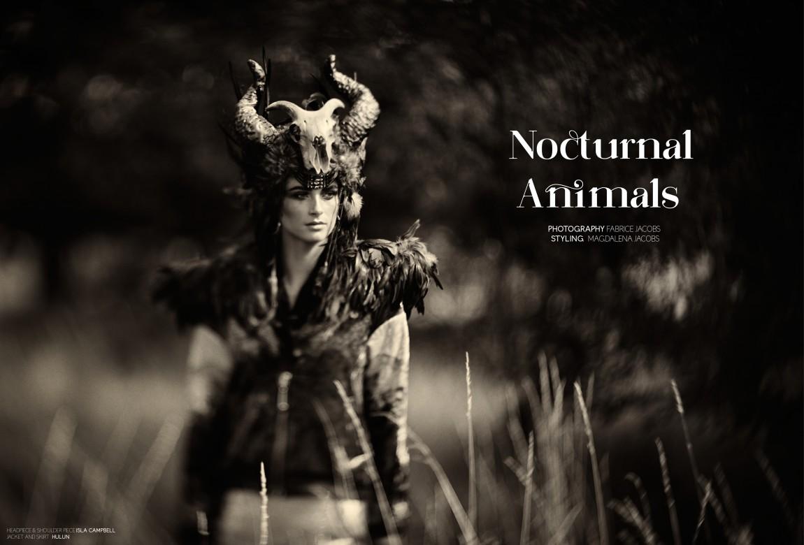 nocturnal animals jpegs